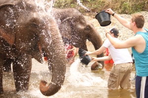 Bath time with the elephants. They love this. Darryl and Scott giving them a great wash.